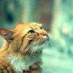 Cat-Shy